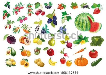 Fruits and vegetables vector download free vector art stock big collection of fruits vegetables and berries vector illustration natural vitamins altavistaventures Gallery