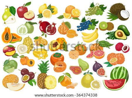 Big collection of isolated fruits on white background. Vector  illustration for your design