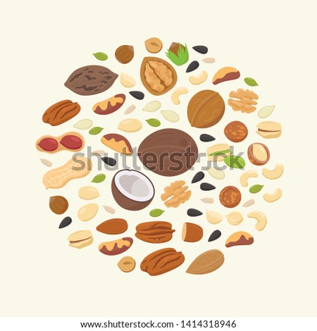 Big collection of nuts and seeds in circle form. Various nuts isolated on white, pecan, macadamia, brazil nut, walnut, almonds, hazelnuts, pistachios, cashews, peanuts, coconuts. Top view vector flat