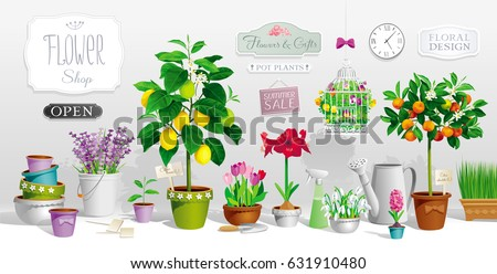 Big collection of the pot plants, citrus trees, flowers,  garden tools and signboards