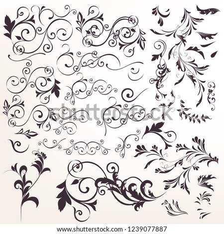 Big collection of vector calligraphic flourishes for design