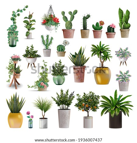 Big collection of vector realistic detailed house or office plant for interior design and decoration. Tropical and Mediterranean plant and flowers plant cactus for interior design and decoration