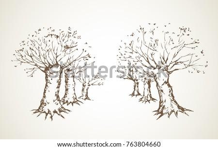 big cut off deciduous oaktree