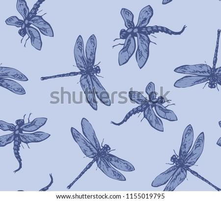 big cute anisoptera on light