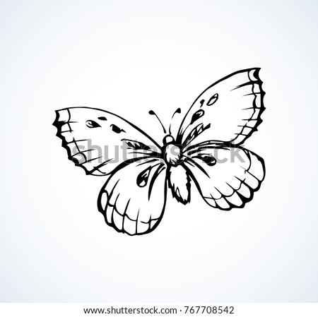 Hand Drawn Butterfly Isolated On White Background