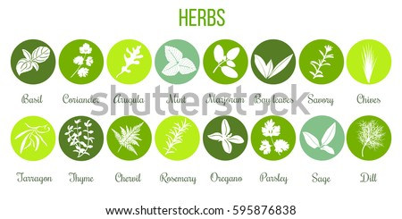 Big icon set of popular culinary herbs white silhouettes in color circles. Color background. Basil, coriander, mint, rosemary, sage, thyme, parsley etc. For cosmetics, store, health care, tag, label Photo stock ©