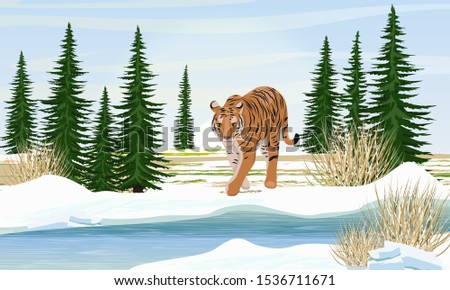 big lonely tiger by the river