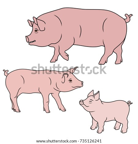 big pig  sow and piglet