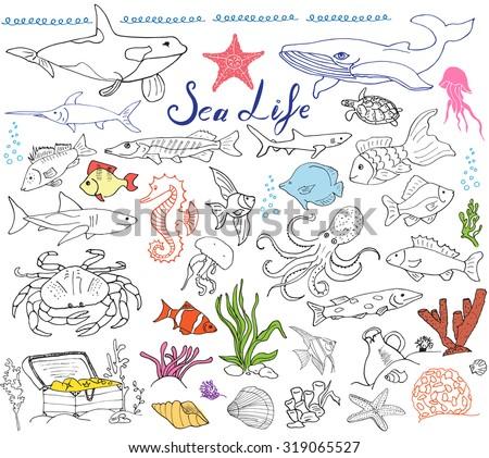 big sea life animals hand drawn