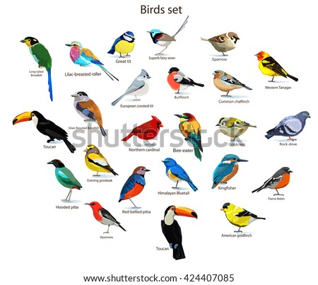 big set birds birds flying