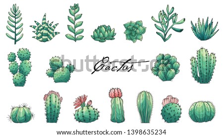 Big set et of elements with hand drawn colored cacti and succulents. Vector icons in colorful sketch style. Sketch style isolated objects