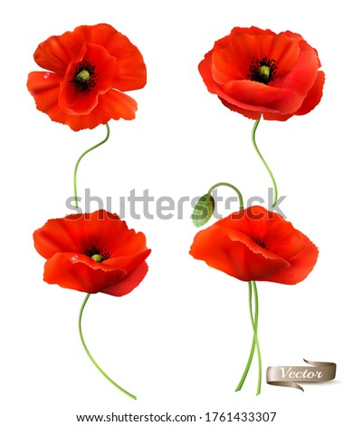 big set of a red poppy isolated