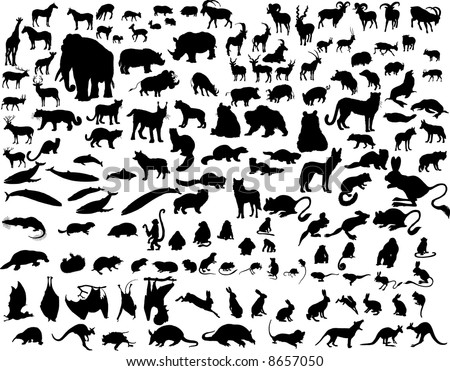 Big Set of  Animal Silhouettes in Different Poses. Zoo, Wildlife, Sea Life Almost Each Kind of Fauna Represented in set. High Detail. Vector Illustration.