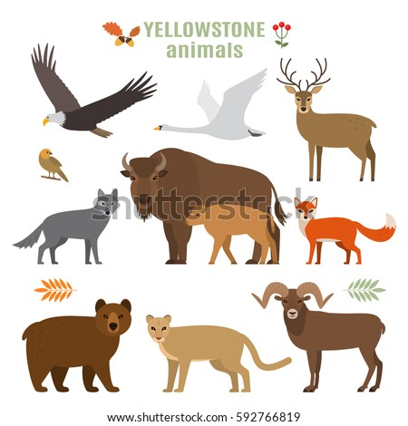 big set of animals and birds in a cartoon style. flat vector illustration isolate on a white background. Yellowstone National Park