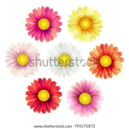 big set of beautiful colorful