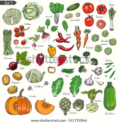 Big set of colored vegetables in sketch style.Vector illustration for your design