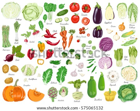 Big set of colored vegetables. Vector illustration for your design