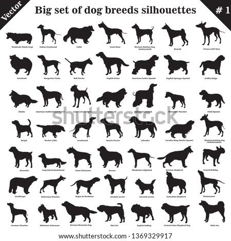 big set of 49 different dogs