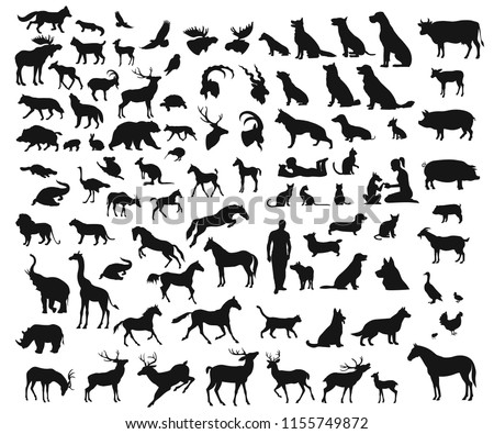 Big set of different wild and domesticated animals on white background
