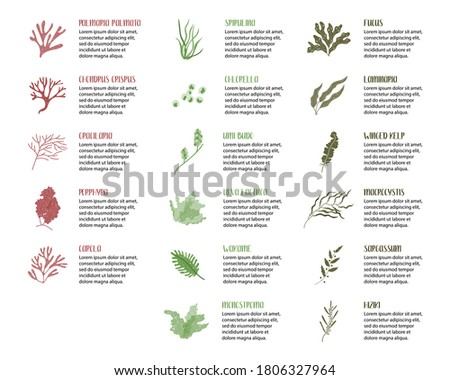 Big set of edible seaweeds. Brown, red and green algae. Sea vegetables. Vector flat cartoon illustration, isolated on white Сток-фото ©
