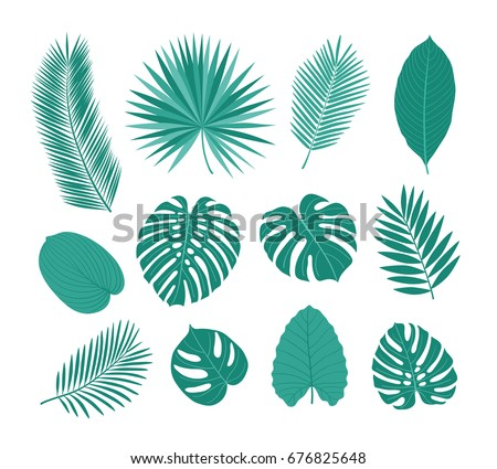big set of tropical leaves
