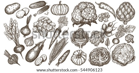 Big Set of vegetables hand drawn illustrations, in sketch, engraving style. Detailed isolated elements on white background, perfect for menu, book design. Vintage retro food images.