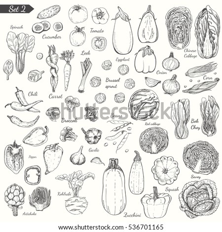 Big set of vegetables in sketch style. Vector illustration for your design
