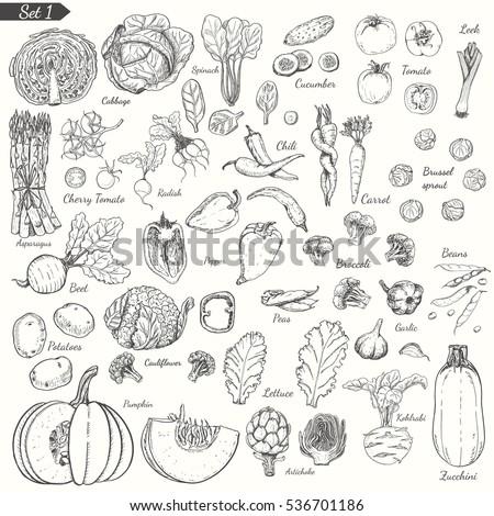 Big set of vegetables in sketch style. Vector illustration for your design