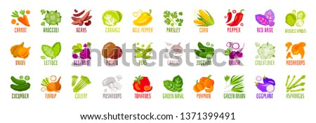 Big set of vegetables nuts herbs spice condiment icons isolated on white background. Colorful leaves lettering. Concept graphic vector element.