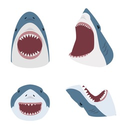 Big shark with open mouth