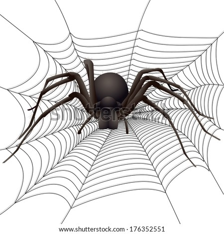 big spider in the web vector