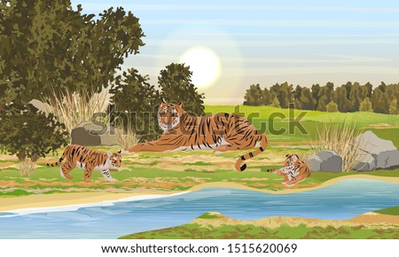 big tigress and two her cub
