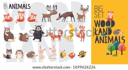 Big vector cartoon collection of wild woodland forest animals: bear, fox, deer, reindeer, elk, squirrel, hedgehog, hare, bird, owl, raccoon