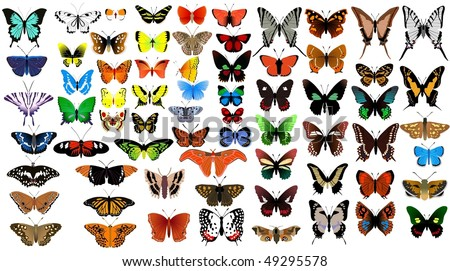 big vector collection of