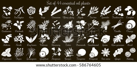 Big vector set of 44 flat style essential oil plants. White Silhouettes on black. Eucalyptus, jasmine, rose, cedar, lavenda, sandalwood etc. For cosmetics, spa, health care, aromatherapy, Ayurveda