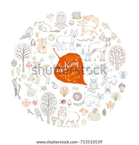 big vector set of wild animals