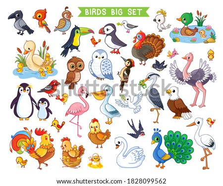Big vector set with birds in cartoon style. Vector collection with birds in children's style on a white background.  Stockfoto ©