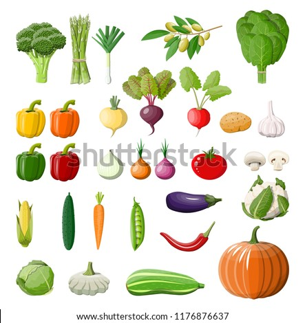 Big vegetable isolated icon set. Onion, eggplant, cabbage, pepper, pumpkin, cucumber, tomato carrot and other vegetables. Organic healthy food. Vegetarian nutrition. Vector illustration in flat style #1176876637
