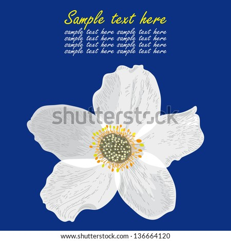 big white flower on blue
