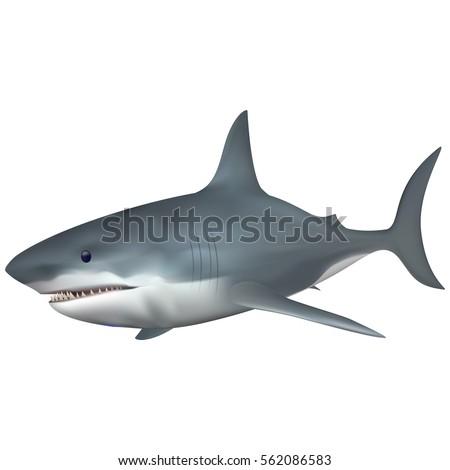 big white shark saltwater fish