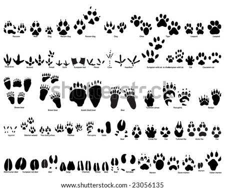 Biggest Set of Animal and Bird Trails Silhouettes With Title About Kind of Animals. Bears, Wolves, Many Kind of Different Birds and Other Fauna Represented in Set. High Detail. Vector Illustration.