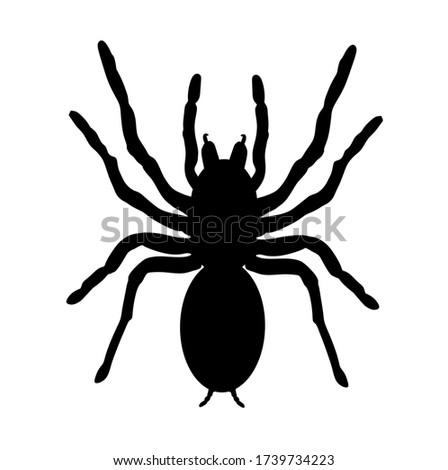 biggest spider symbol