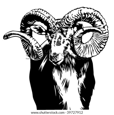 Bighorn Sheep Fighting. stock vector : bighorn sheep