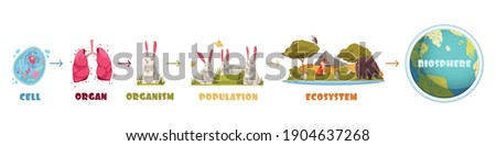 Biological hierarchy infographics scheme from cell and organ to ecosystem and biosphere cartoon vector illustration Foto stock ©