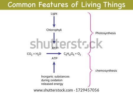 Biology - Common Properties of Living Things - Autotrophic Living (Producer)