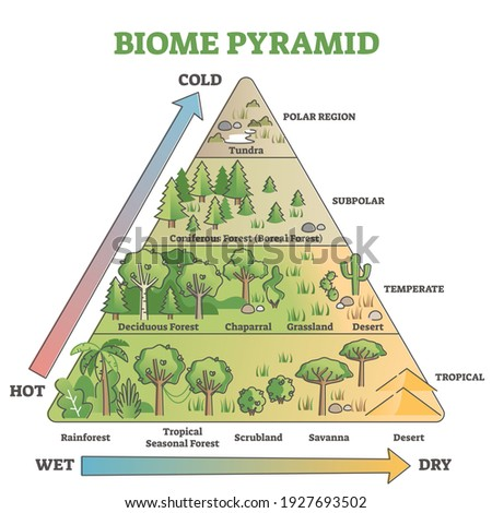 Biome pyramid as ecological weather or climate classification outline diagram. Educational labeled scheme with temperature and moisture axis that effects polar, subpolar, temperate and tropical region Foto stock ©