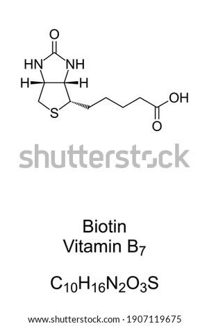 Biotin, vitamin B7, chemical formula and skeletal structure. Involved in many metabolic processes, primarily related to the utilization of fats, carbohydrates, and amino acids. Illustration. Vector. Photo stock ©