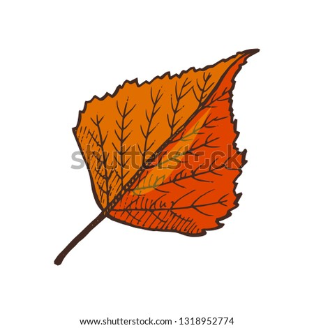 Birch leaf autumnal symbol, isolated icon of foliage with sharp shape on top vector. Leafy item, falling from tree. Defoliation in November and October