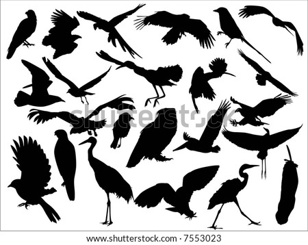 bird - stock vector