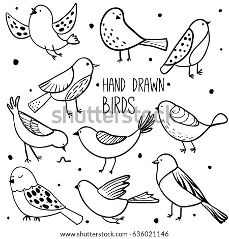 bird collection collection of